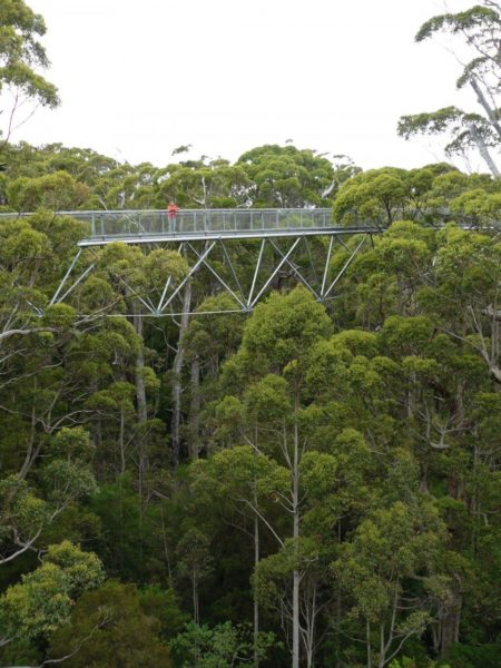Tree Top Walk Valley of the Giants West Australië