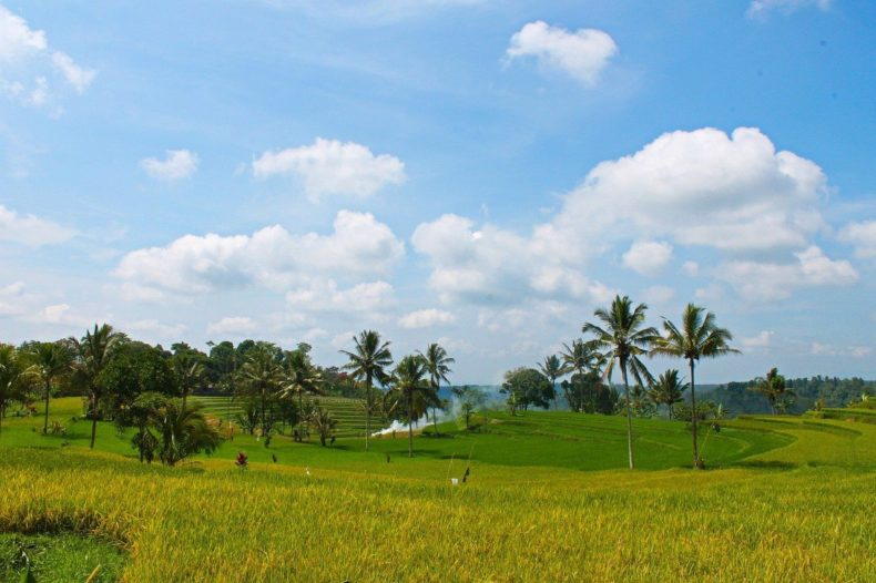Indonesia-Java-rice-fields