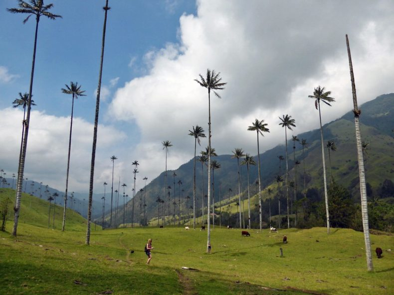 valle-de-cocora-salento-colombia