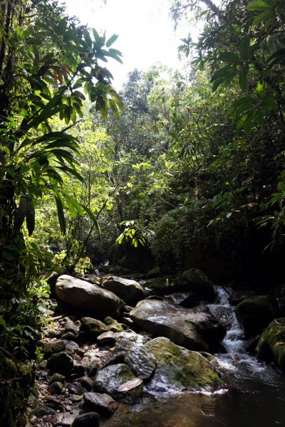 Colombia-Medellin-Hike-Nature
