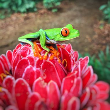 Rondreis Costa Rica: een vakantie Costa Rica vol jungle, wildlife en strand