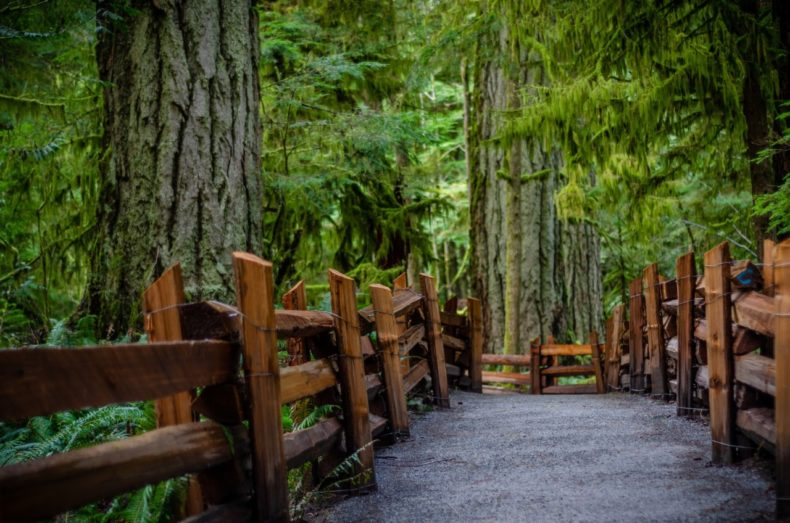 cathedral grove hotspots canada